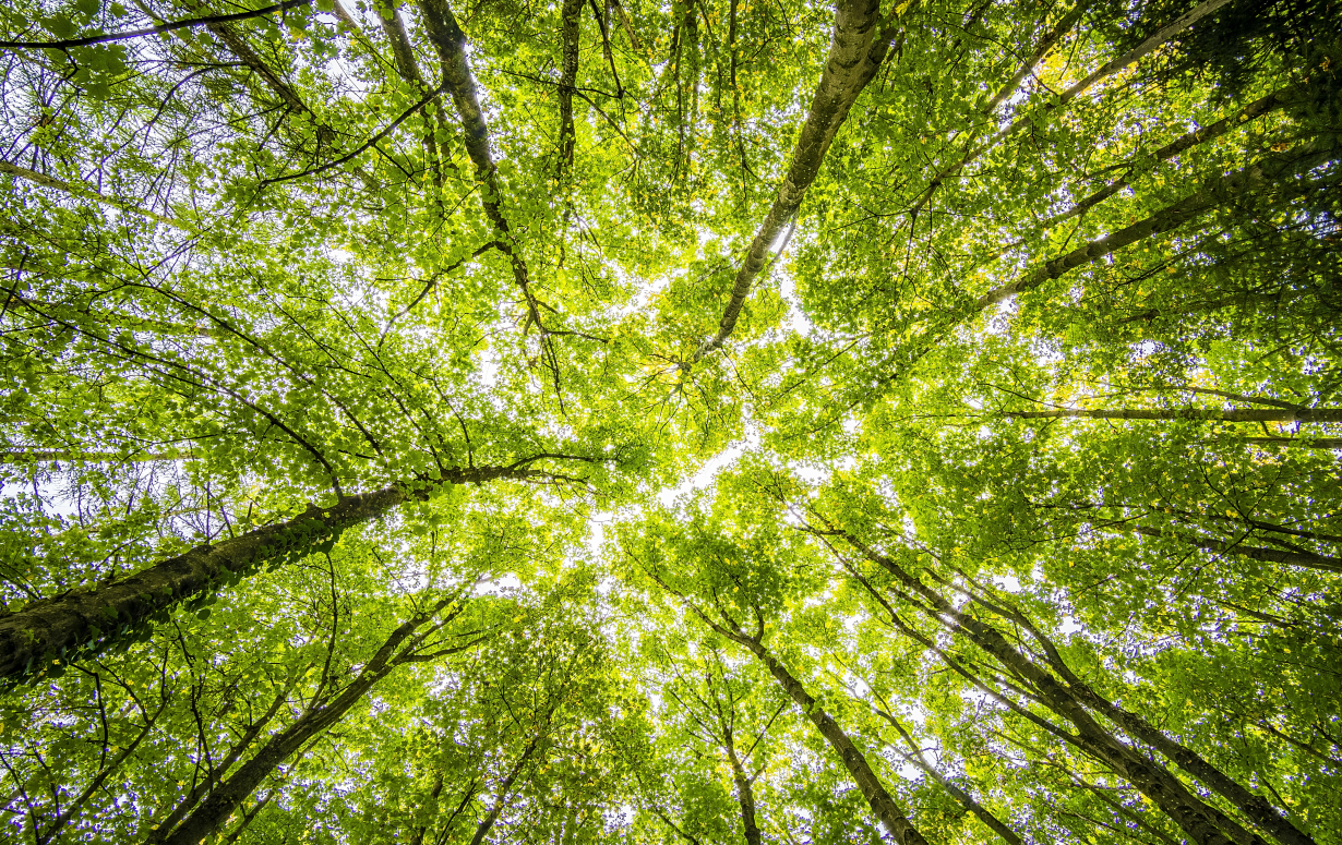 Woodfiber in horticulture